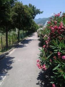 Pista ciclabile poco ciclata di via Vulcano a Terni