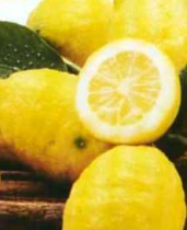 Commensali extracomunitari o stranieri ? no grazie bellissimi limoni di Sicilia