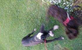 Cani e Cascata
